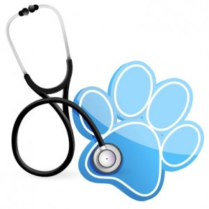 veterinarians & pet stores