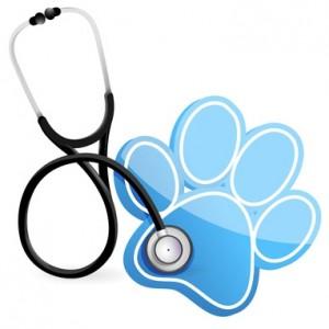 veterinarians & pet stores